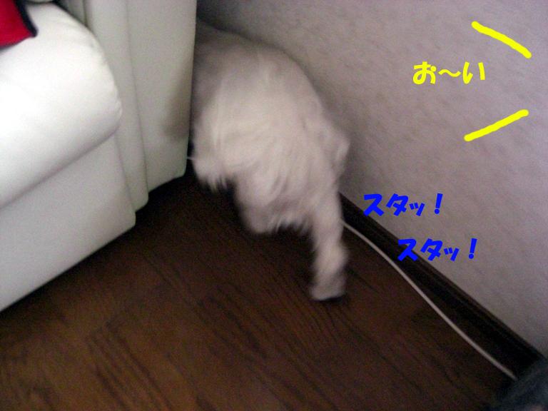 b0060071_0505024.jpg