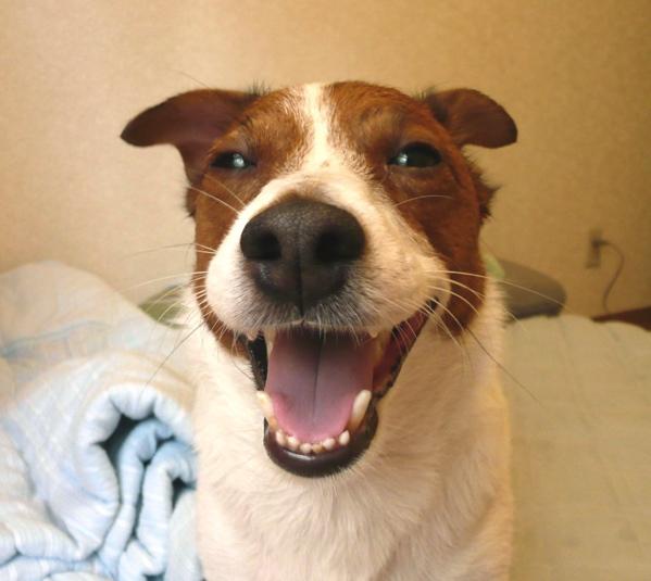 * 笑い犬 *_f0146198_21335891.jpg