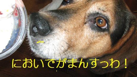 d0104209_20204043.jpg