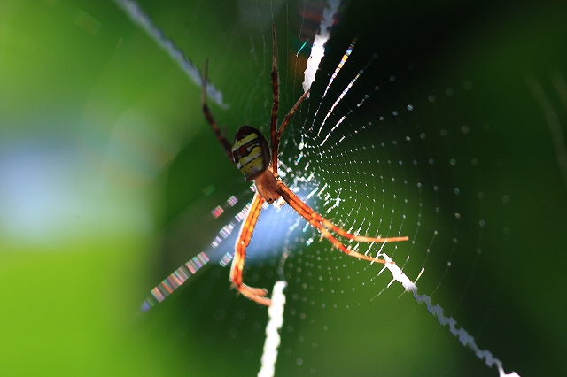 蜘蛛・蜘蛛の巣_c0110922_23282473.jpg