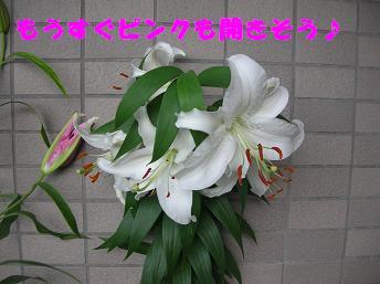 c0004744_1944256.jpg