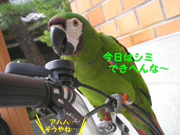 f0132055_11492185.jpg