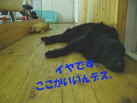 d0043478_0212086.jpg