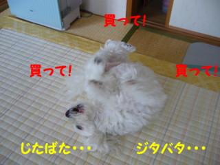 f0145192_2065637.jpg