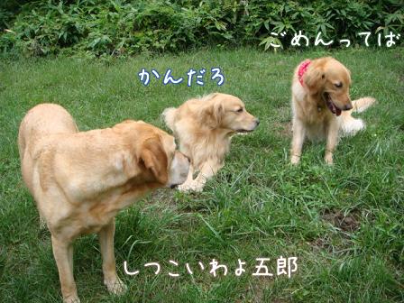 仲直り_f0064906_16104530.jpg