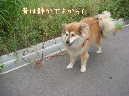 仲直り_f0064906_1623672.jpg
