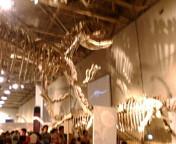 恐竜だぁ…_f0048422_128192.jpg