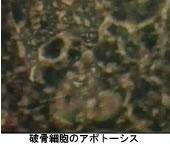 b0115553_10573116.jpg