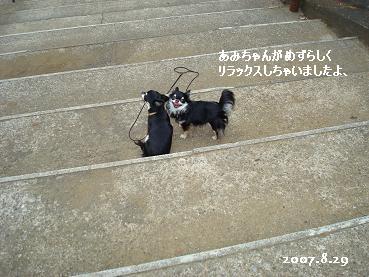 雨の降る前にお散歩_d0006467_15284832.jpg
