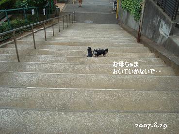 雨の降る前にお散歩_d0006467_1529299.jpg