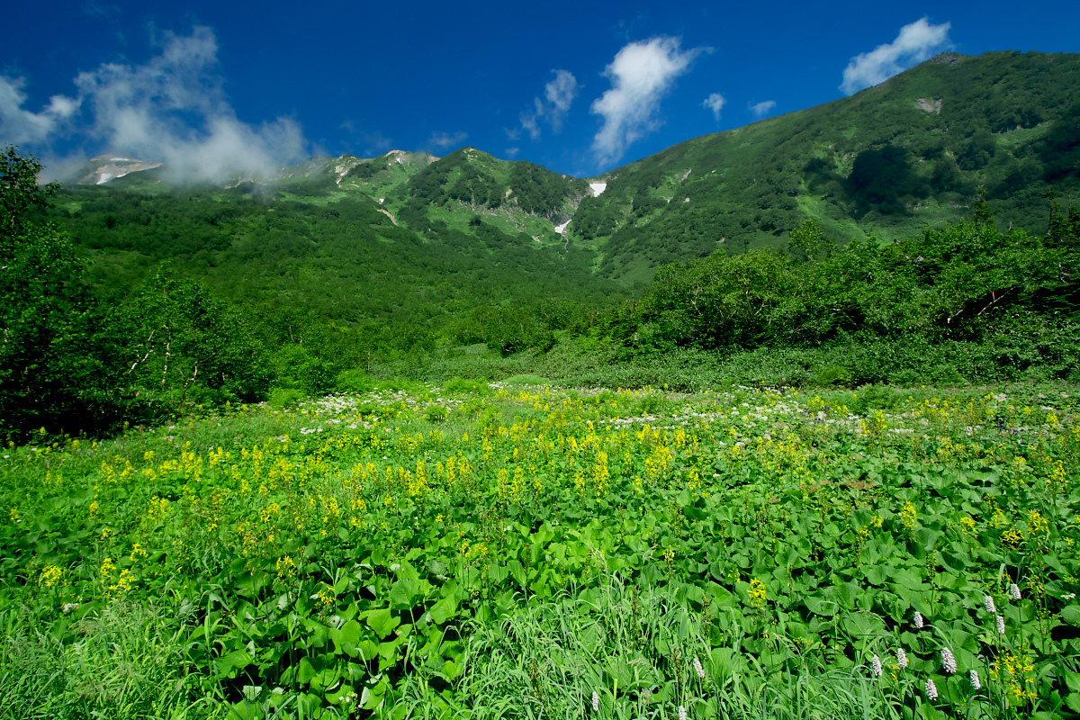 栂池自然園 <盆休み> 2_f0021869_22534463.jpg
