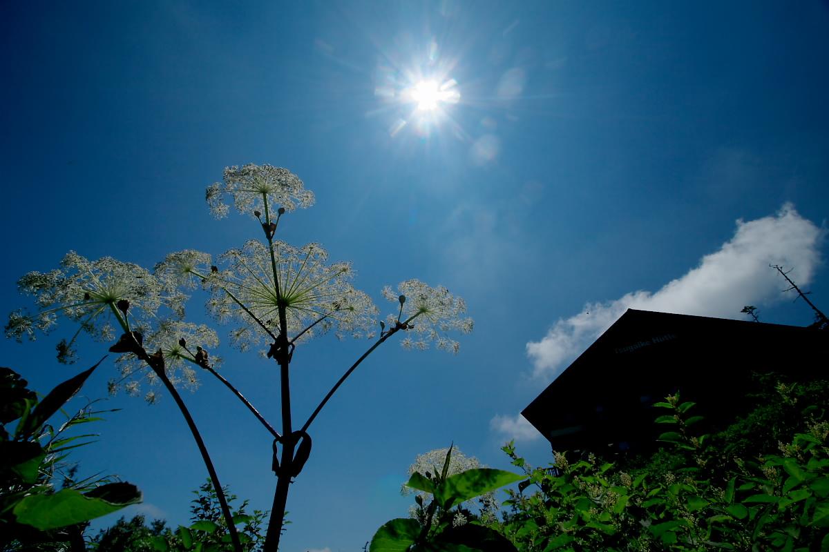 栂池自然園 <盆休み> 2_f0021869_22574163.jpg