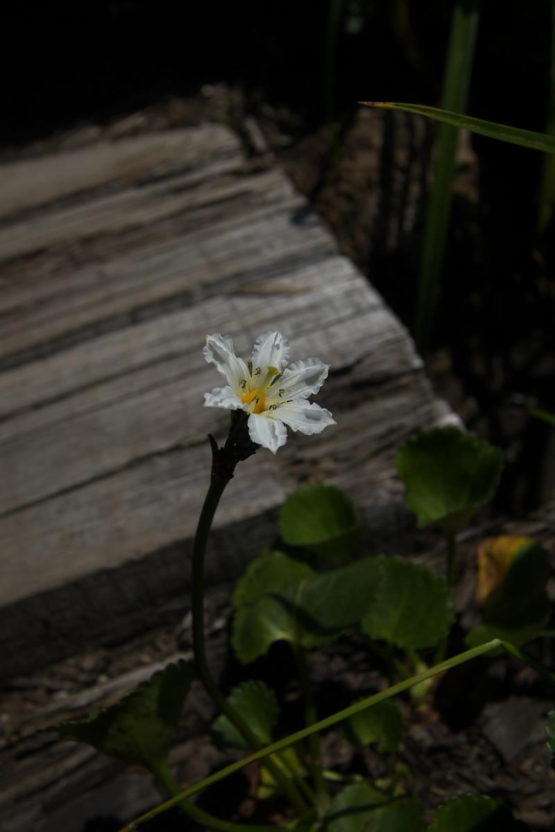 栂池自然園 <盆休み> 2_f0021869_22584645.jpg