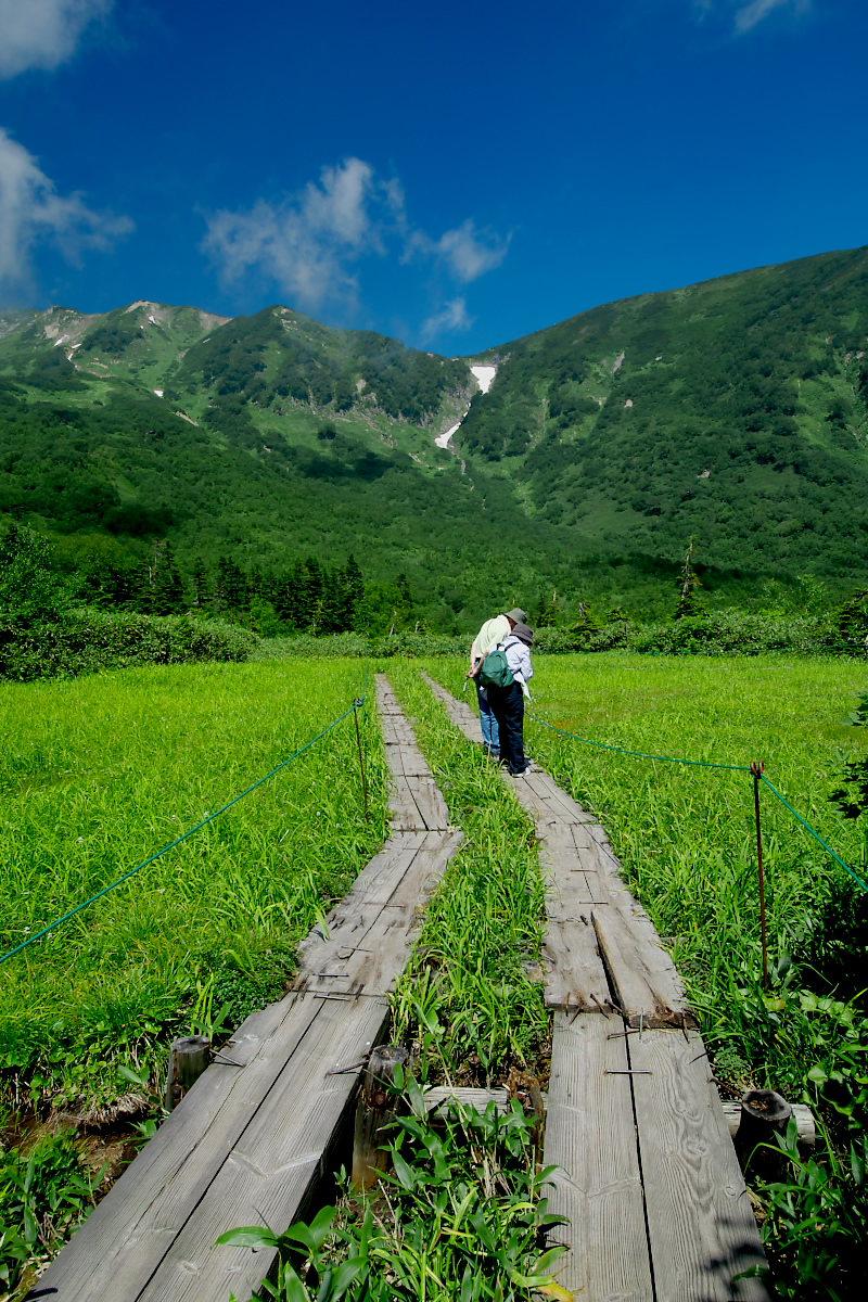 栂池自然園 <盆休み> 2_f0021869_22591974.jpg