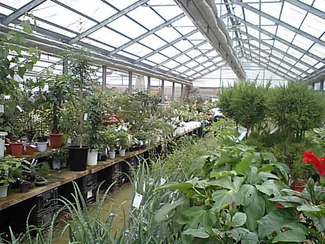 花園の園芸センター_a0107574_13223896.jpg