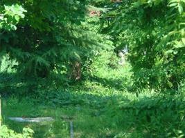 自然がいっぱいの広島で暮らしましょう!_b0078597_19212739.jpg