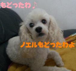 c0132205_20335343.jpg