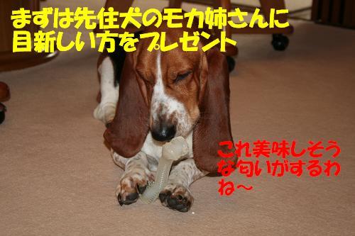 f0121712_1544477.jpg