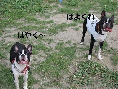 f0141516_0241978.jpg