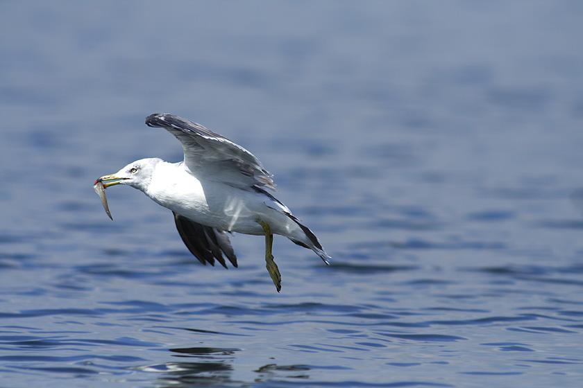 干潟を飛ぶ鳥_c0001429_0115848.jpg