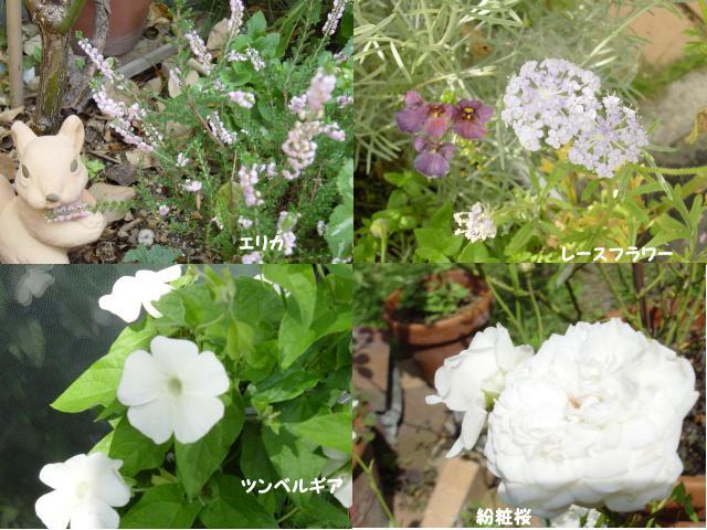 d0020136_1055767.jpg