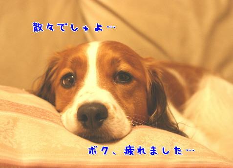 d0013149_2253213.jpg