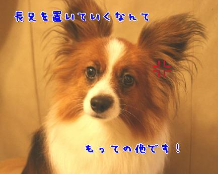 d0013149_2405050.jpg