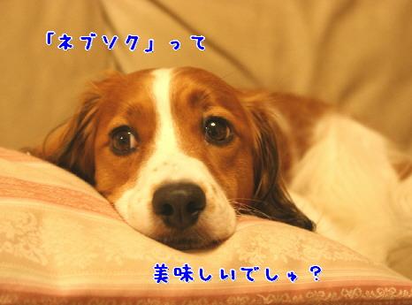 d0013149_2591689.jpg