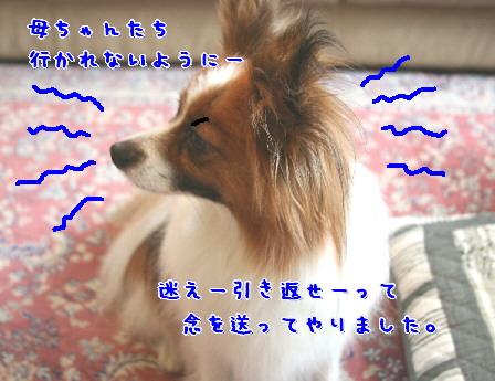 d0013149_3241255.jpg