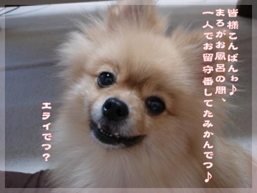 b0078073_18164351.jpg