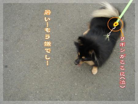 b0078073_18203325.jpg