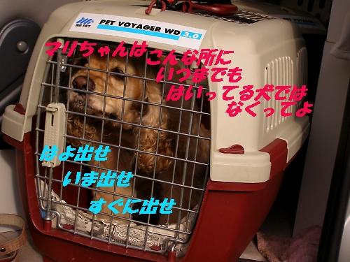 b0067012_1235523.jpg