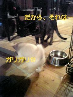 f0148927_20303534.jpg