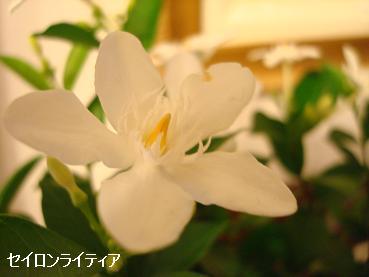 白い花/黒い抜け毛_d0006467_18521288.jpg