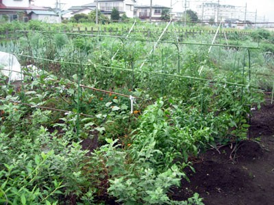 冬野菜用畝作り_e0097534_18563371.jpg