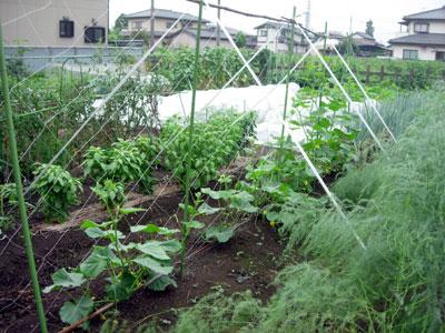 冬野菜用畝作り_e0097534_18564744.jpg