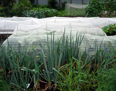 冬野菜用畝作り_e0097534_18571711.jpg