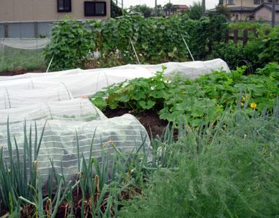 冬野菜用畝作り_e0097534_18573374.jpg