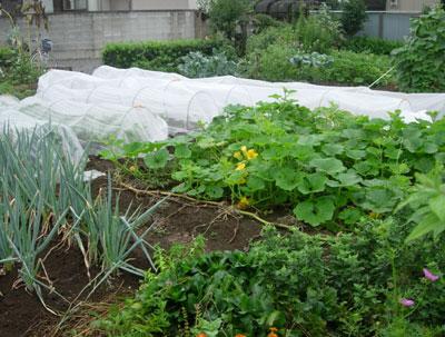 冬野菜用畝作り_e0097534_1857457.jpg