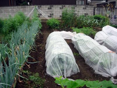 冬野菜用畝作り_e0097534_18574852.jpg