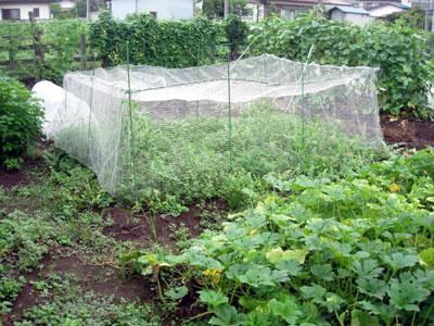 冬野菜用畝作り_e0097534_18581926.jpg