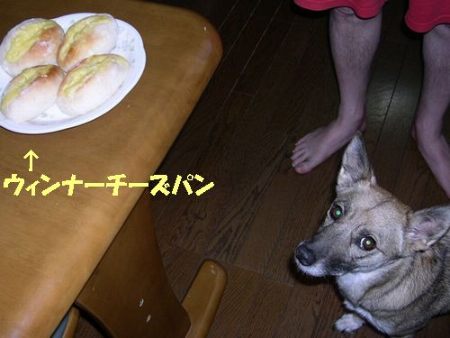 メダカとり_b0025947_19585954.jpg