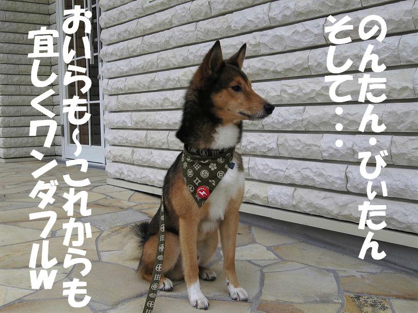 d0032004_20114480.jpg