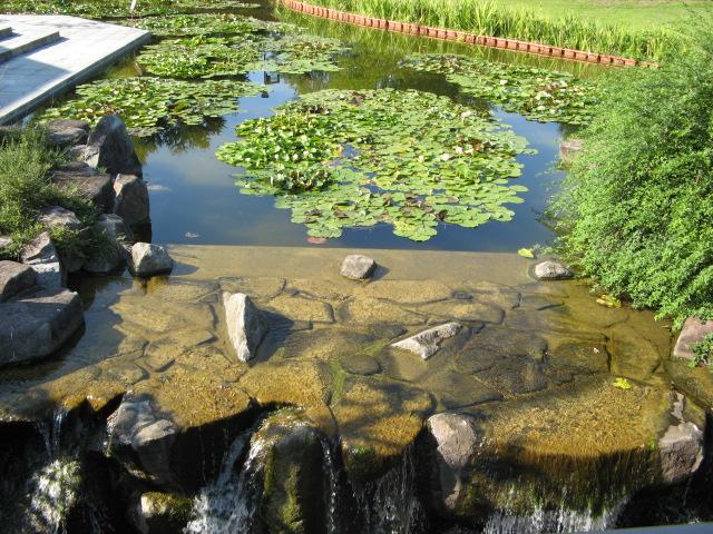 水生植物園みずの森Part.4 _a0106807_17151311.jpg