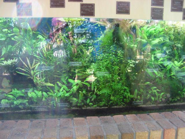 水生植物園みずの森Part.4 _a0106807_1756310.jpg