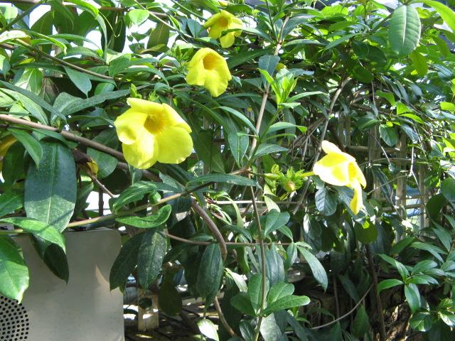 水生植物園みずの森Part.4 _a0106807_17563546.jpg
