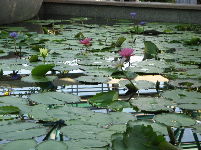 水生植物園みずの森Part.4 _a0106807_17584359.jpg