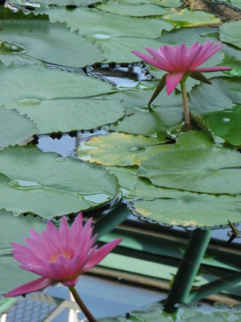 水生植物園みずの森Part.4 _a0106807_1804451.jpg