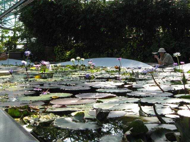 水生植物園みずの森Part.4 _a0106807_1831875.jpg