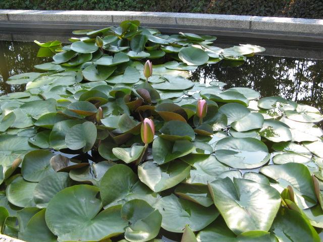 水生植物園みずの森Part.5_a0106807_18324137.jpg
